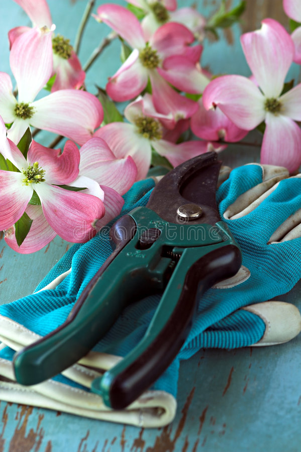 Gardening cutters and gloves royalty free stock images