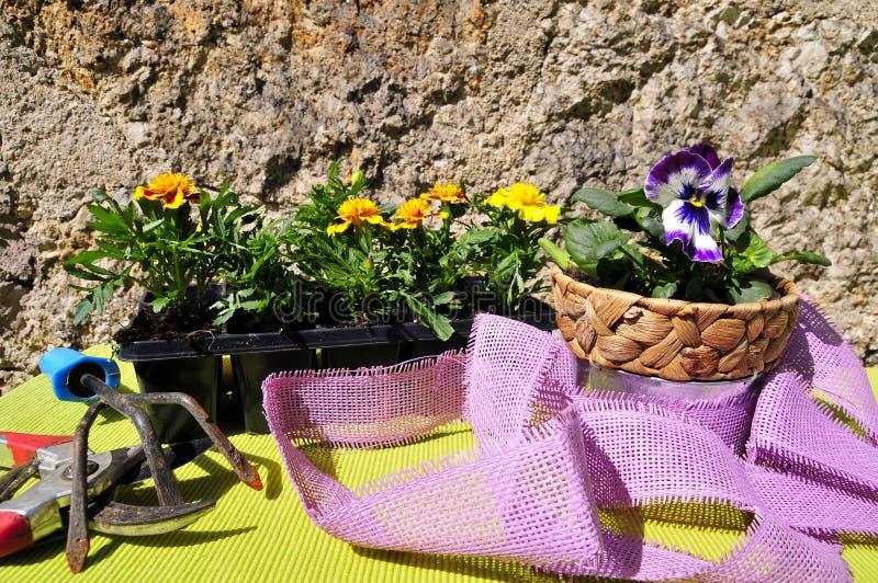 Download Gardening Decorating Flower Spring Stock Image - Image: 19123909