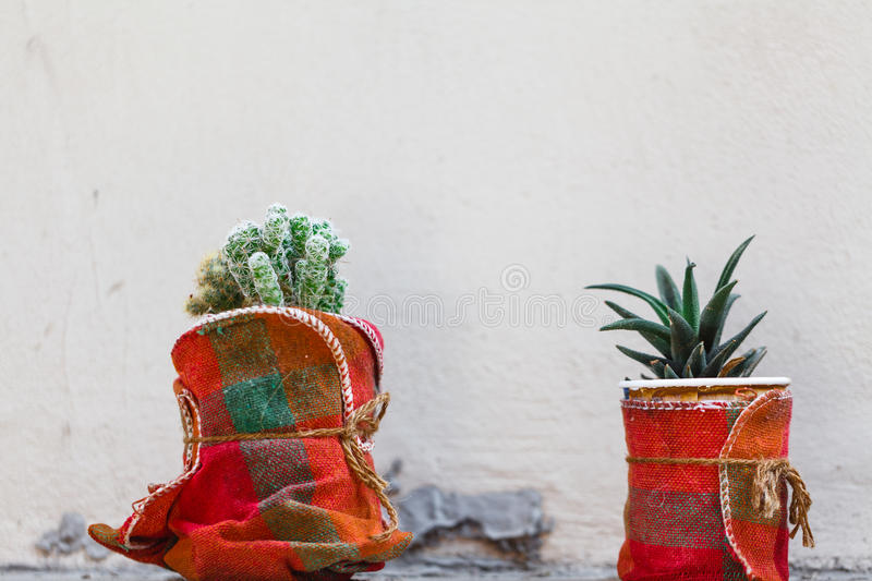 Gardening, decoration concept - flowers and plants in a container at street stock photos