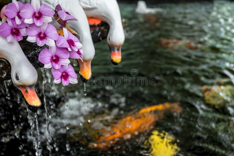 Gardening design with white duck statues catching golden fish. Gardening design with white duck statues catching golden carp fish in fountain royalty free stock images