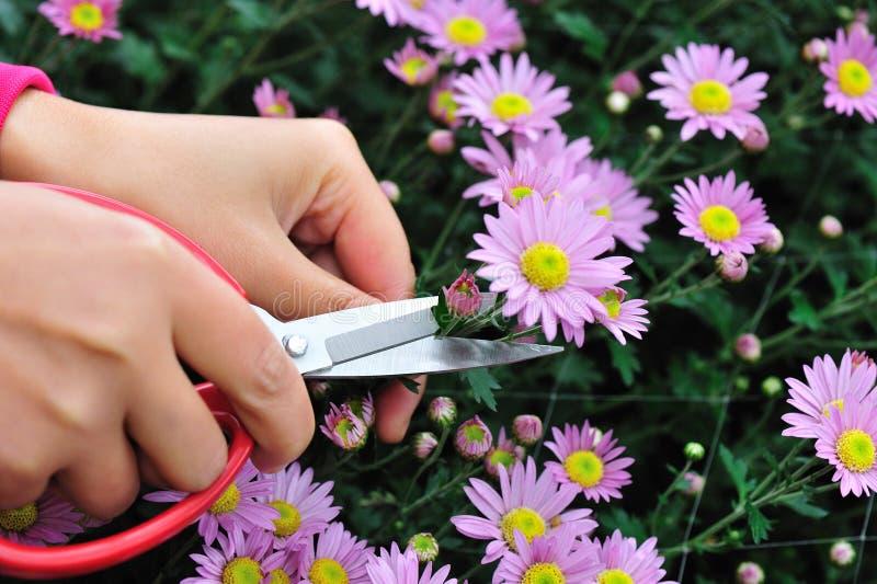 Gardening flower stock photo