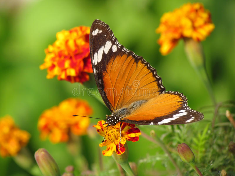 Gardening, flowers and butterfly royalty free stock photo