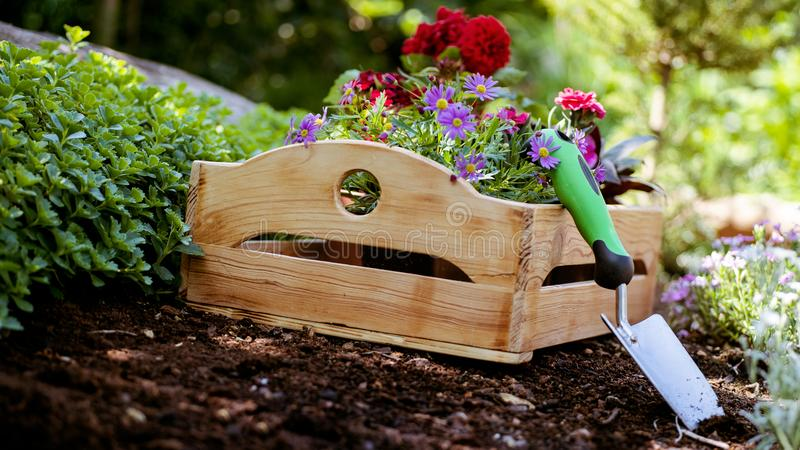 Gardening. Garden Tools and Crate Full of Gorgeous Plants Ready for Planting In Sunny Garden. Spring Garden Works Concept. royalty free stock images