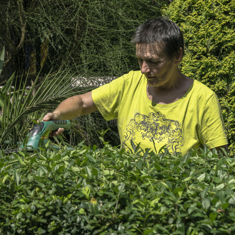 Gardening hedge cutting royalty free stock photography