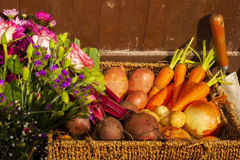 Gardening with home grown organic vegetables and flowers. Grown on the allotment for healthy living and good food. living the country life and getting your 5 a stock photo