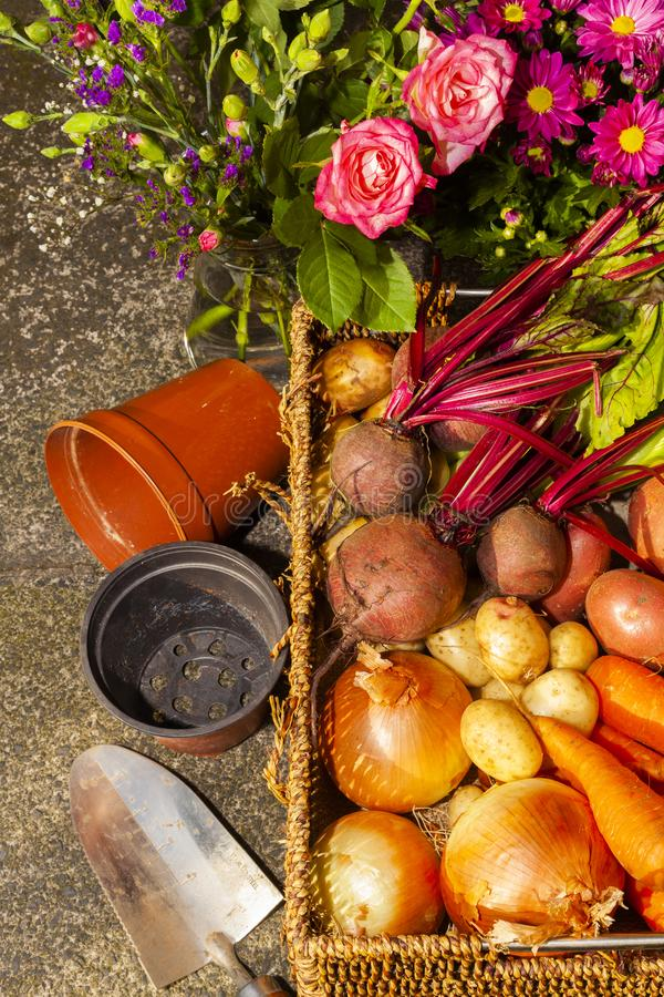 Gardening with home grown organic vegetables and flowers. Grown on the allotment for healthy living and good food. living the country life and getting your 5 a royalty free stock photo