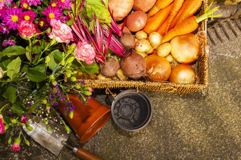 Gardening with home grown organic vegetables and flowers. Grown on the allotment for healthy living and good food. living the country life and getting your 5 a royalty free stock photos