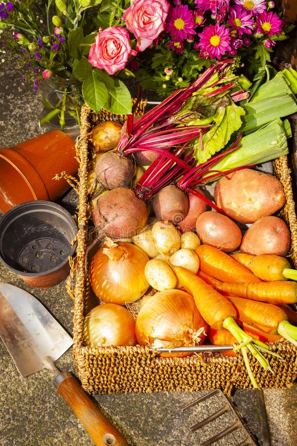 Gardening with home grown organic vegetables and flowers. Grown on the allotment for healthy living and good food. living the country life and getting your 5 a stock image