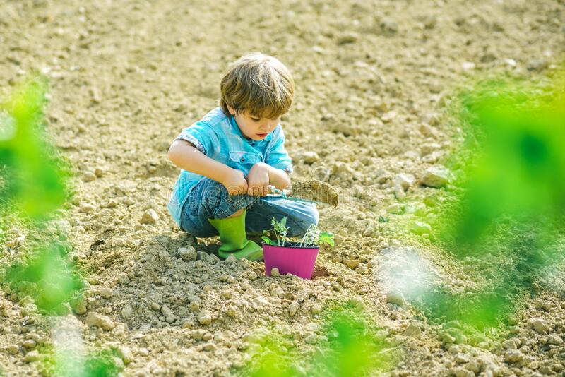Gardening with a kids. Planting flowers. Child play in spring garden. Making world green. Kid portrait on farmland. royalty free stock photo