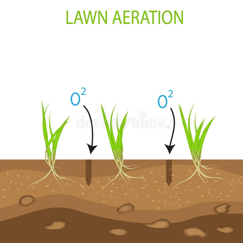 Gardening of lawns, landscape design services. Vector on white background.Green lawn with on the ground in the context of aeration vector illustration