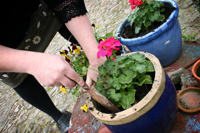 Gardening, planting flowers stock photo