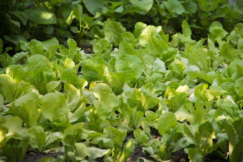 Gardening and Planting stock photo