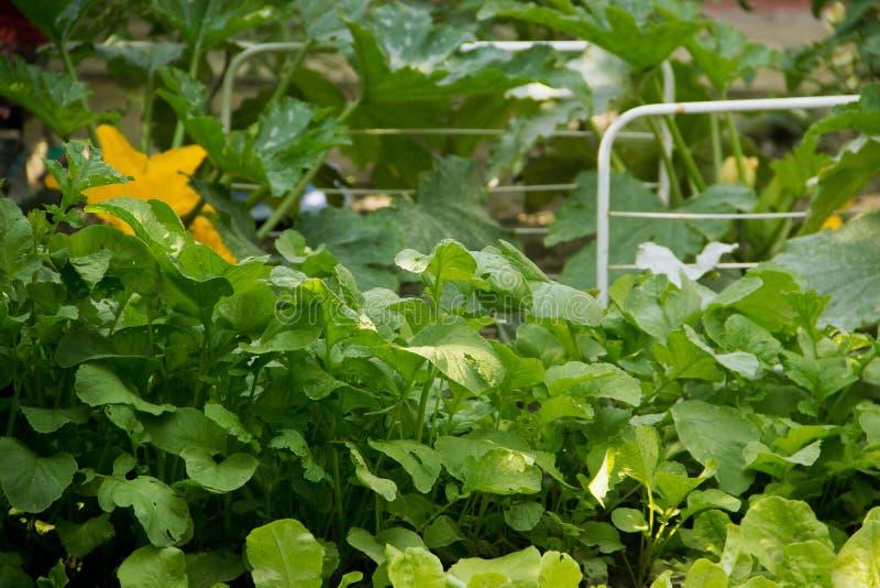 Gardening and Planting stock photos