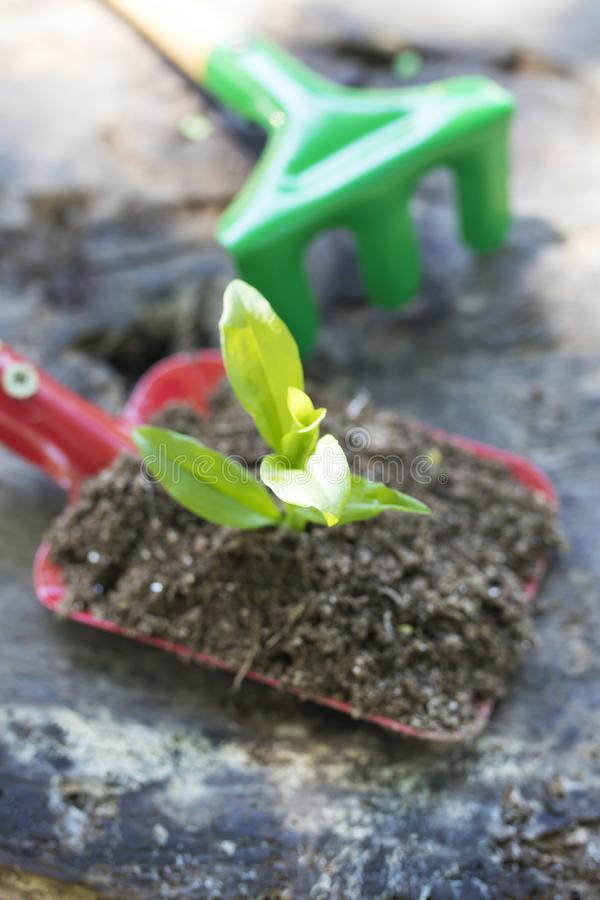 Gardening and plants. Gardening tools and young potted plant stock image