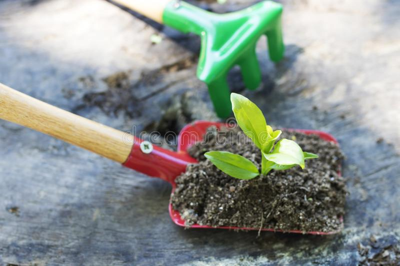 Gardening and plants. Gardening tools and young potted plant royalty free stock images