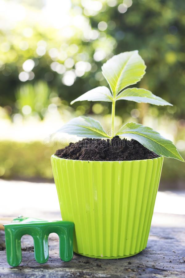 Gardening and plants. Gardening tools and young potted plant stock photography