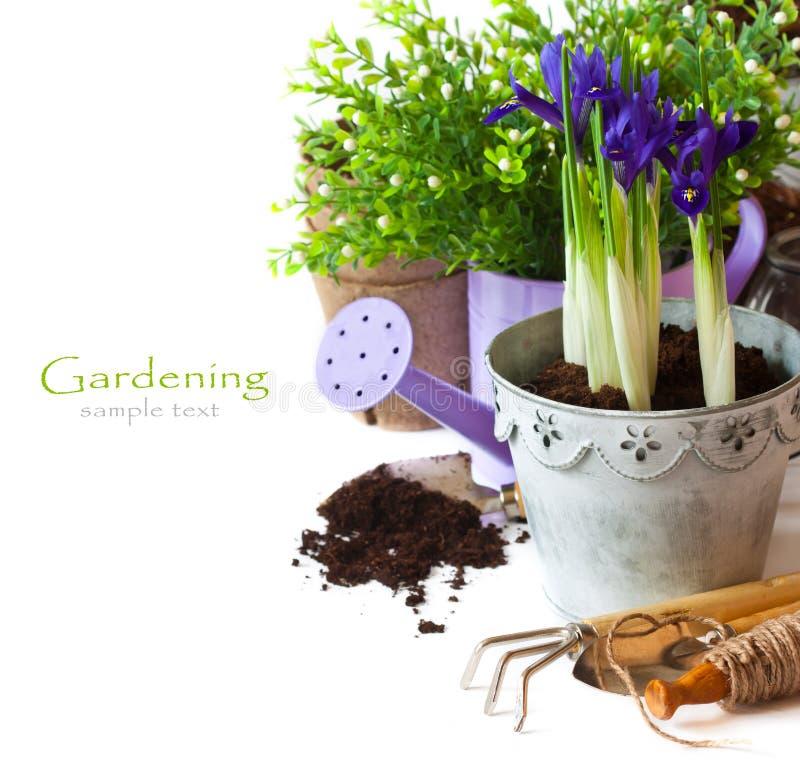 Gardening. royalty free stock photography