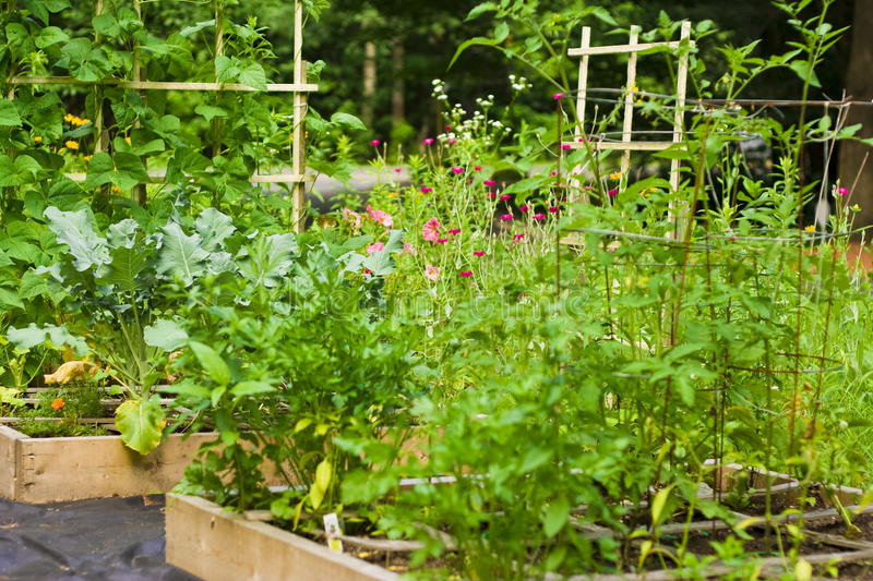 Gardening by the square foot royalty free stock photography