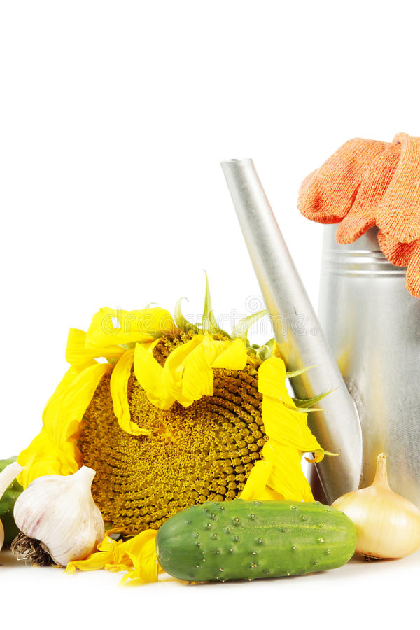 Gardening still life of crop of fresh vegetables with watering can royalty free stock photos