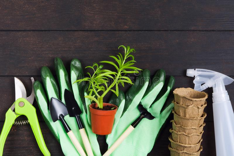 Gardening still life, flat lay style. Succulent, gloves, pots, pruner and sprayer on wooden background stock images