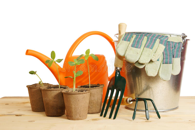 Gardening still life with young seedling over white stock photo