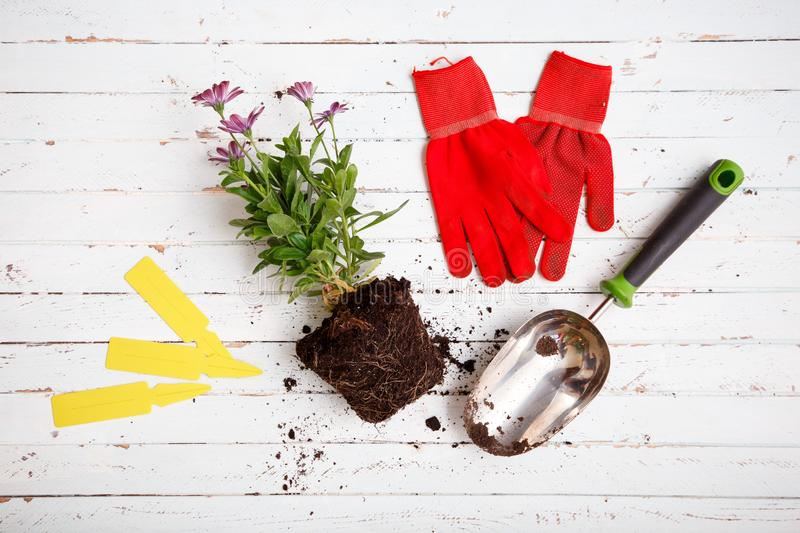 Gardening tools and flowers in pot for planting stock photos