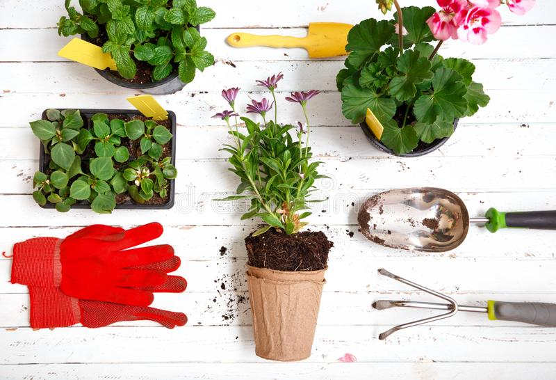 Gardening tools and flowers in pot for planting stock photo
