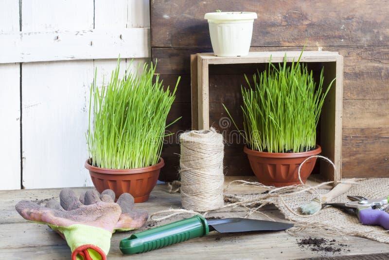 Gardening tools, greens in pots on dark wooden table stock photo