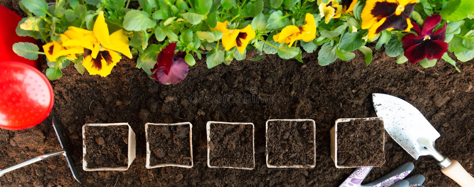 Gardening tools and paper pots on soil background. Planting spring pansy flower in garden. Spring garden work concept stock photography