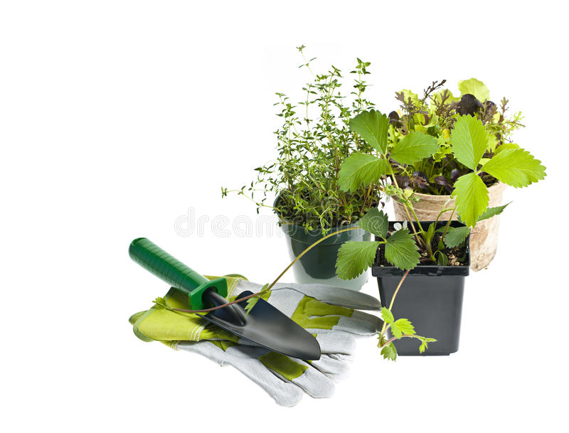 Download Gardening tools and plants stock image. Image of leaf - 24721235