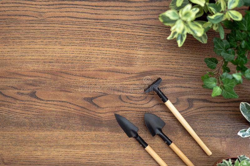 Gardening tools and plants in pots on wooden table with copy space stock images