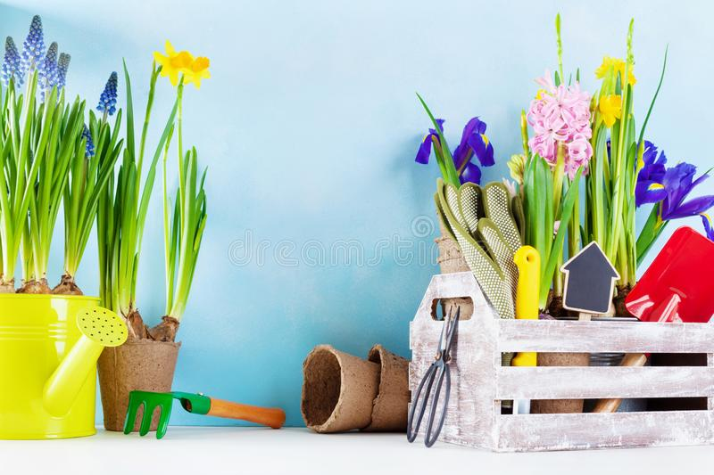 Gardening tools and seedling of spring flowers for planting on flowerbed in the garden. Horticulture concept stock images