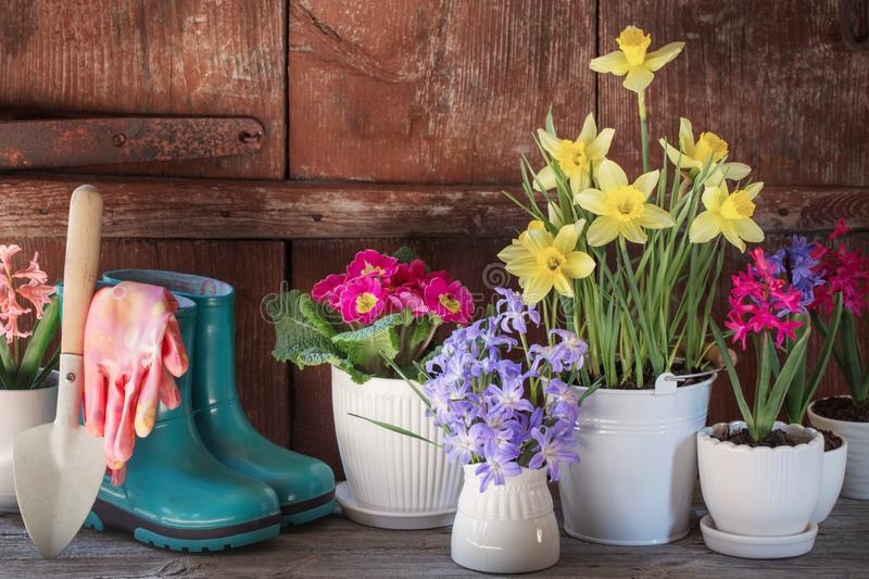 Gardening tools and spring flowers stock images