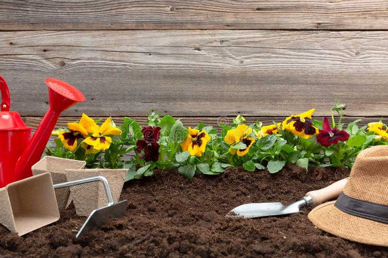 Gardening tools and spring pansy flowers on the terrace in the garden. Gardening concept royalty free stock photo