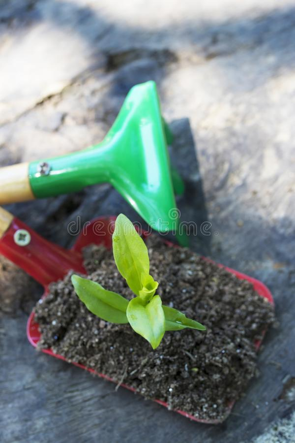 Gardening and plants. Gardening tools and young potted plant stock photos