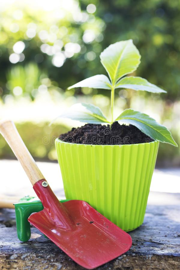 Gardening and plants. Gardening tools and young potted plant royalty free stock image