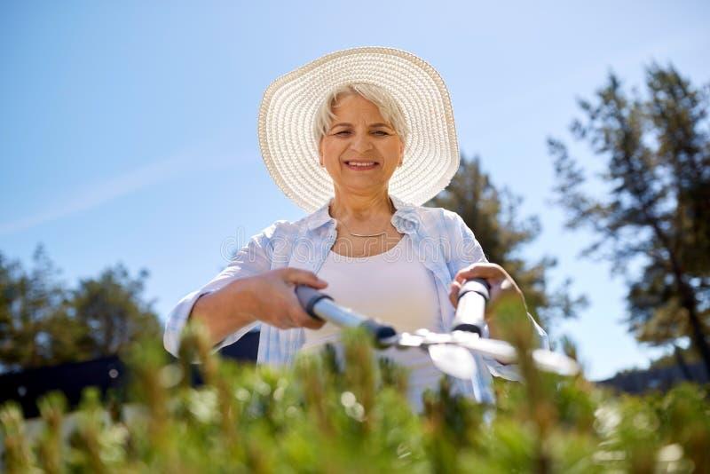 Senior gardener with hedge trimmer at garden stock photography
