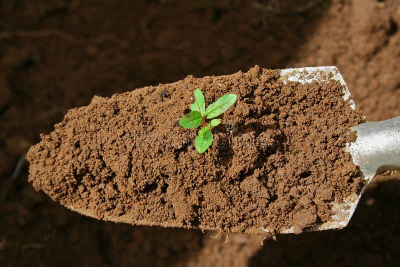 Gardening trowel royalty free stock photo