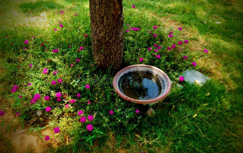 Gardening a water pot in park for birds pink flowers around it. Gardening a water pot in park for birds pink flowers around stock photography