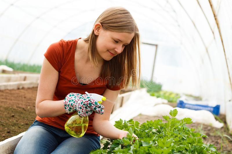 Gardening Work at the Glasshouse. Young pleased woman working at the glasshouse royalty free stock photos
