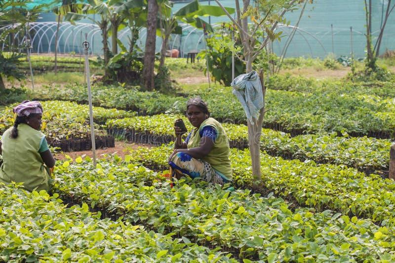 Gardenists bei der Arbeit lizenzfreies stockbild