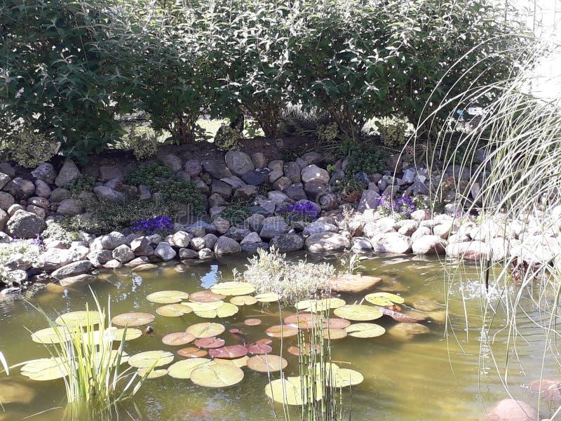 Gardenpond immagini stock