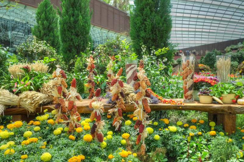 Gardens by the Bay, Flower Dome: Autumn Harvest royalty free stock photos