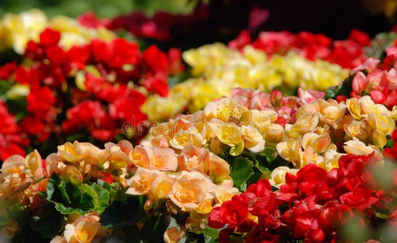 Gardens of color. Variety of spring flowers. stock image