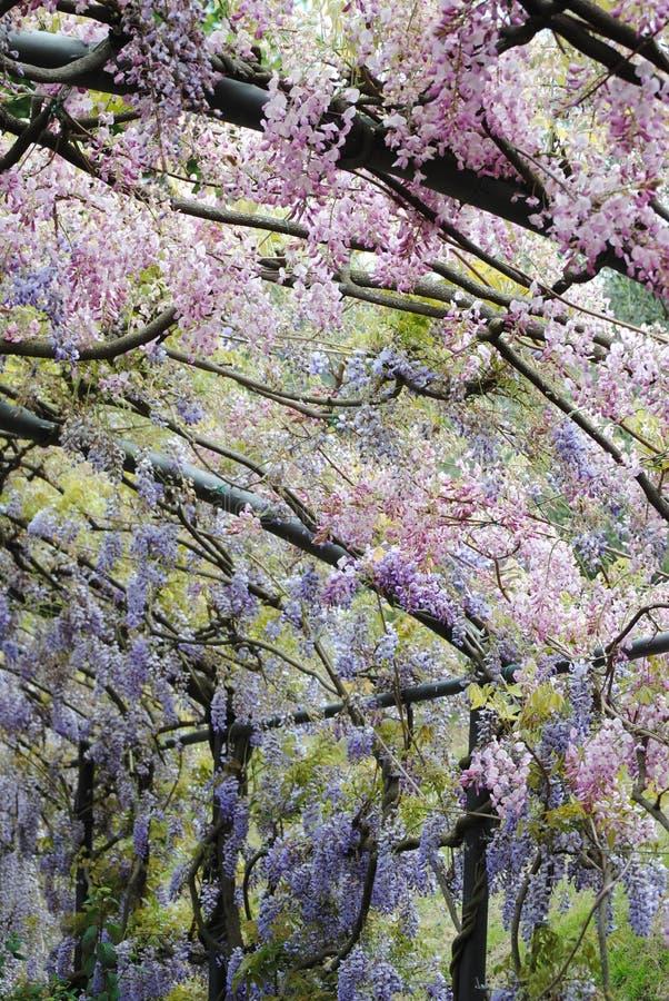Gardens of Florens royalty free stock image