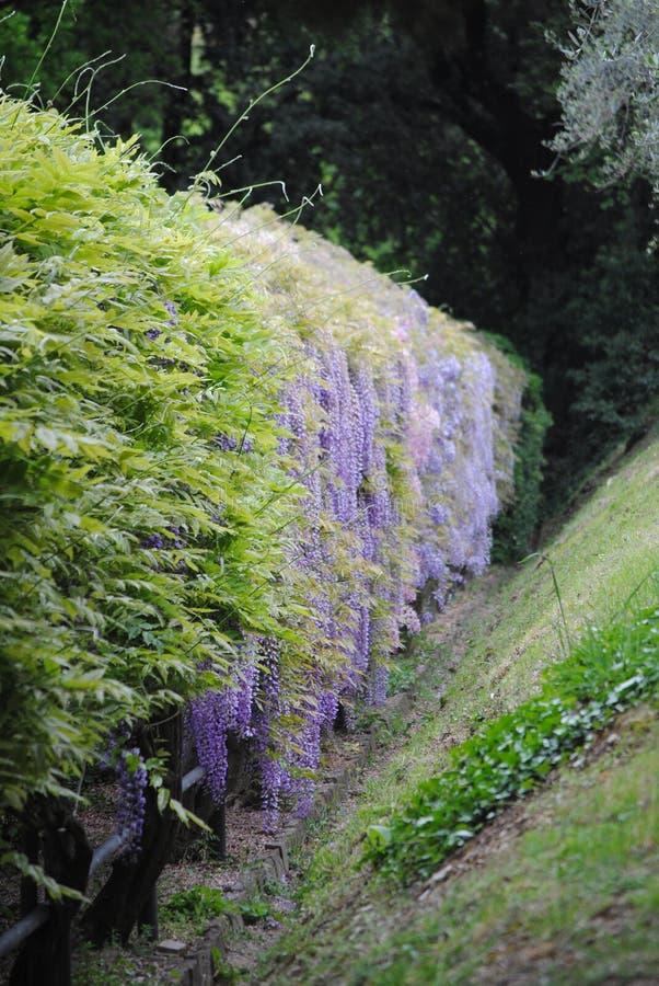 Gardens of Florens stock image
