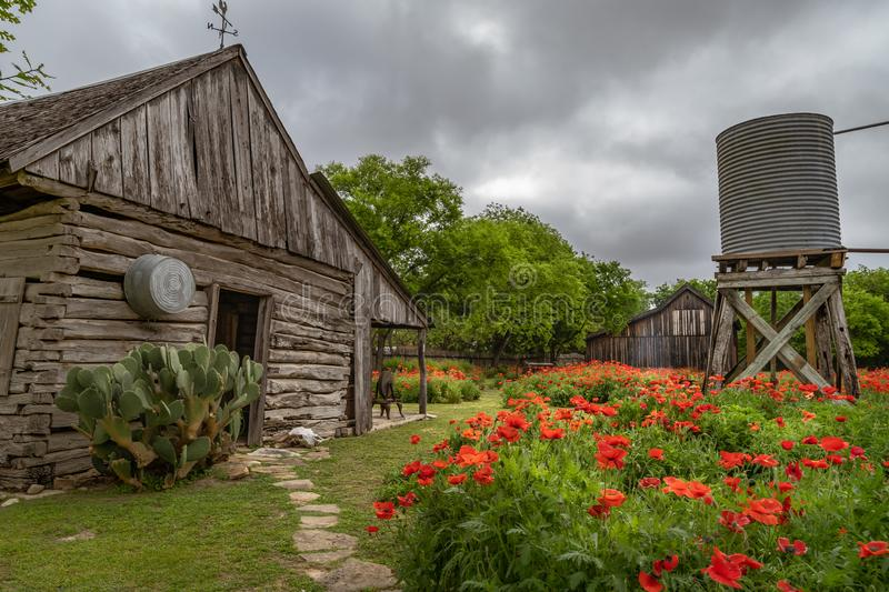 Gardens of red poppies along antique well and cabin. With rustic barn in the background stock image