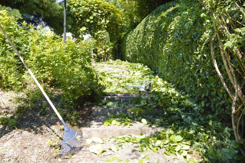 Gardenwork: Cutting the hedge royalty free stock photos