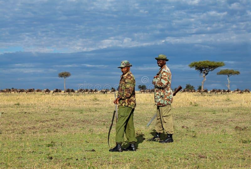 Gardes forestiers de Mara de masai photos stock