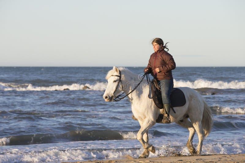 Gardians riding on White horse of Camargue France stock photo